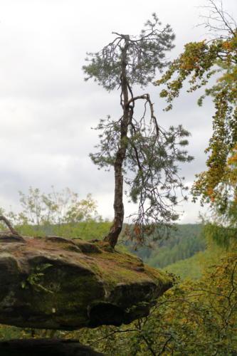 Der fliegende Baum